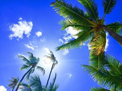 vakanties met palmbomen